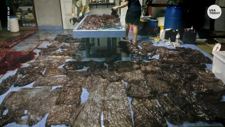Pilot whale dies after swallowing more than 80 plastic bags: 'Still going to dump trash?'