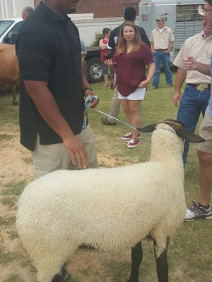 Mississippi State tackle Rufus Warren walks around with a sheep during the Cattleman's Dinner on Sunday.