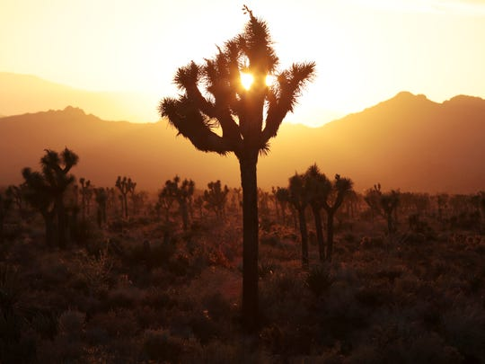 The sun sets at Joshua Tree National Park on May 29, as seen from the Boy Scout Trail head.