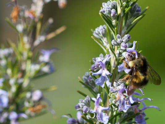 Gardening Other Pollinators