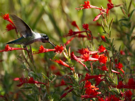 Join an expert filed guide for this family bird walk