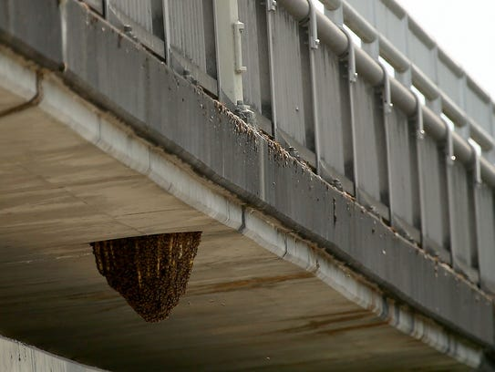 A large honey bee nest beneath the Warren Avenue Bridge