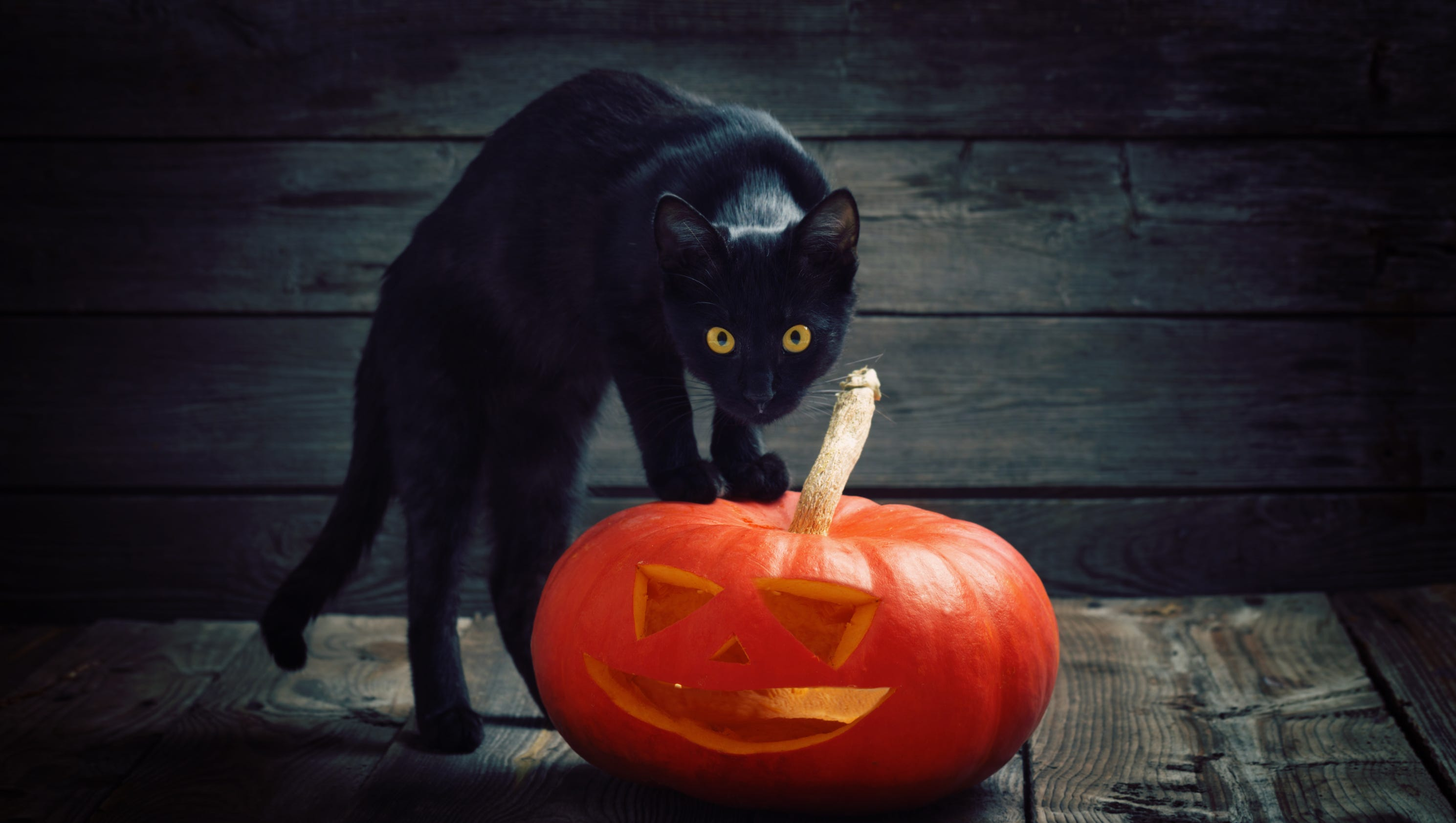 Black Cat In A Pumpkin