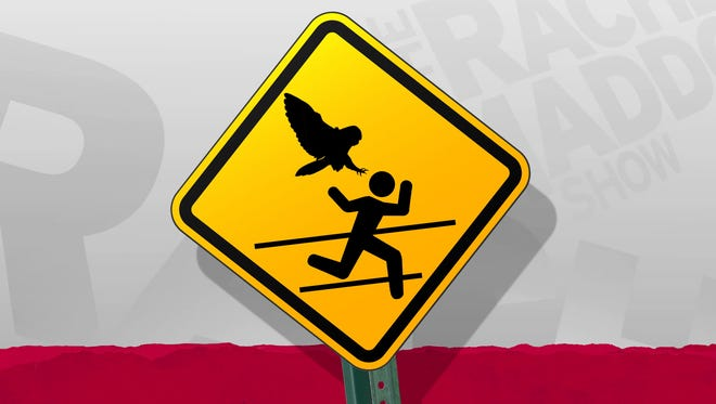The Rachel Maddow Show's owl attack warning sign.