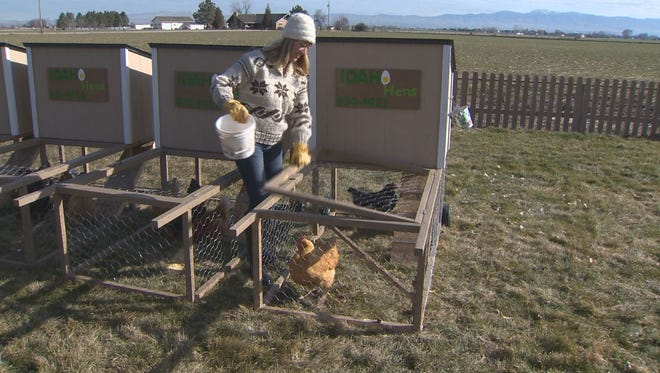 Tiona Marburger, owner of Idaho Hens in Boise, Idaho, tends to a pair of chickens.