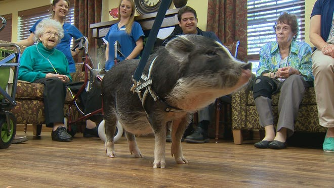 Every weekend, Pumba and Boris hang out with Alzheimer's patients in Littleton