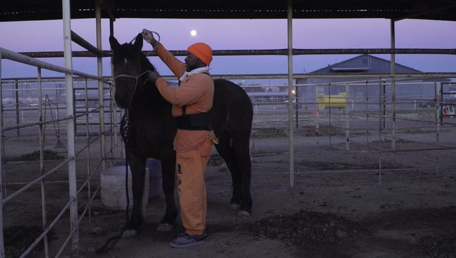 Dashonte Abdul Al-Wakil tends to a horse on the Arizona State Prison Complex in Florence.
