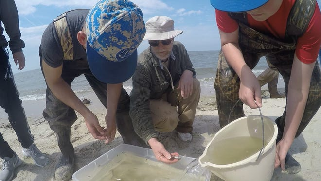 Arthur Manning (center), a biology teacher at Cumberland Christian School, leads students in an investigation of the shore and the water during a field trip to Fortescue.
