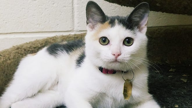A grant from the Petfinder Foundation will help the Humane Society of North Central Arkansas purchase cat trees for the cat playroom at the facility.
