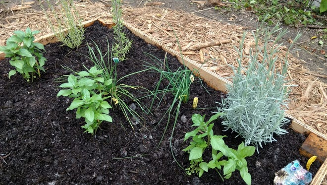 Plants flourish in a raised garden bed.