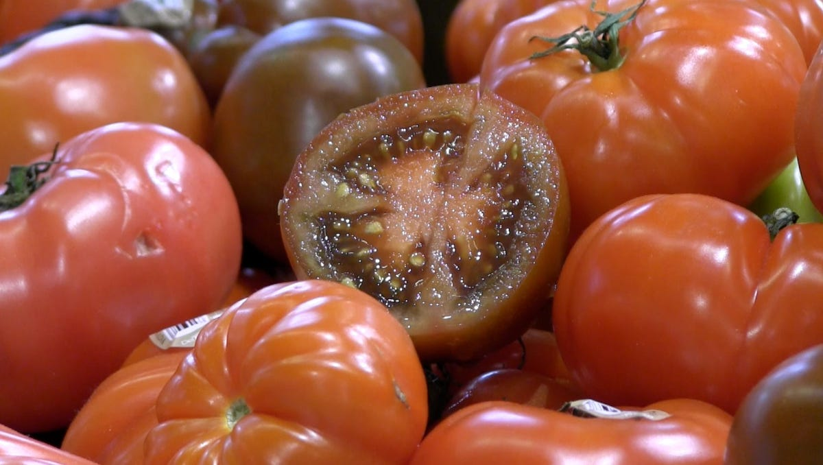 How to care for tomatoes in season