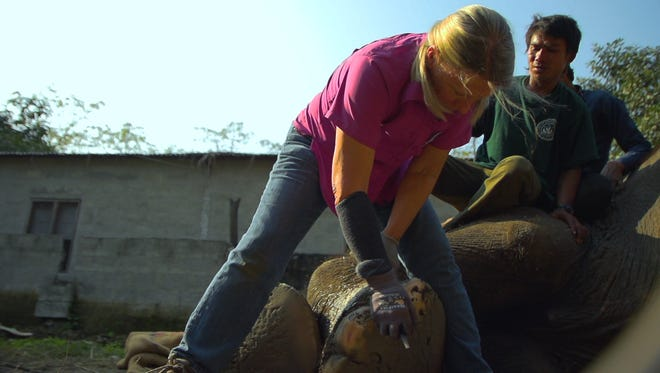 """Carol Buckley appears in these stills from the documentary """"Unchained,"""" a film by Alex Rivera about Buckley and Elephant Aid International."""
