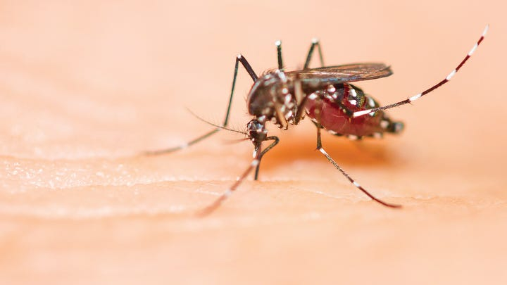 West Nile virus detected in a Central Pa. mosquito, more testing to come