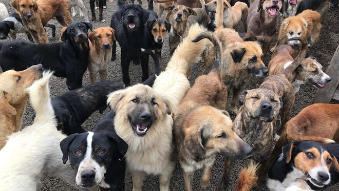 Nearly 1,200 pups live in this doggy paradise.