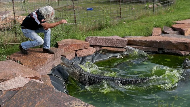 "Stephen ""Doc"" Hopkins, owner of Doc's Harley-Davidson, interacts with an alligator in the zoo located behind the dealership in Bonduel."
