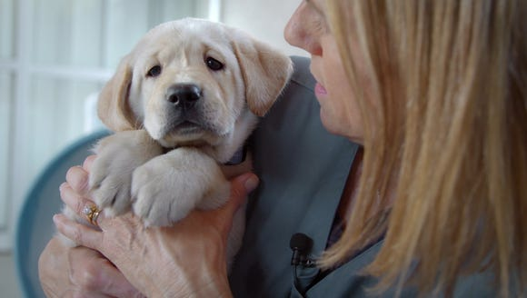 Phil is one of the five stars of 'Pick of the Litter,'