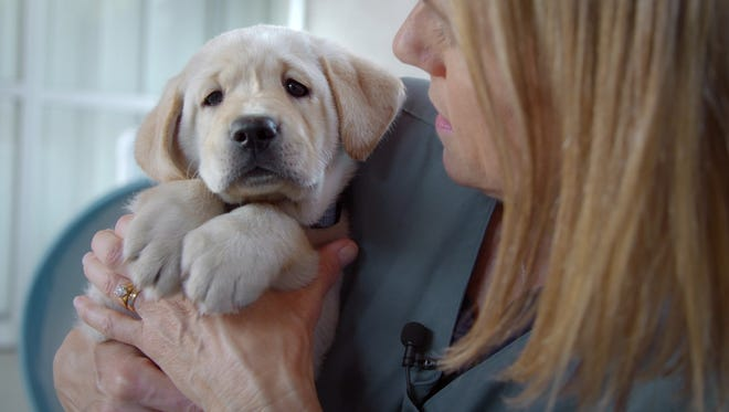 Watch cute puppies get named in service-dog doc 'Pick of the