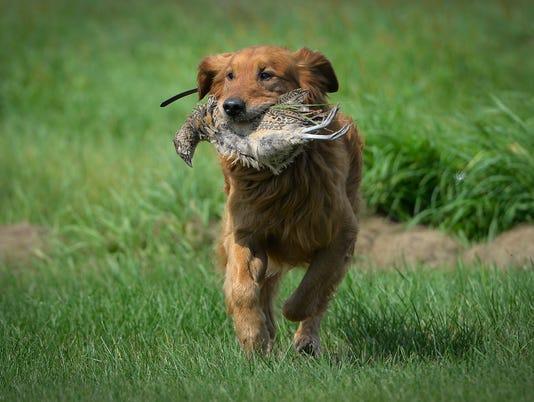 636065087175396515-0812-Dog-Training-03.JPG