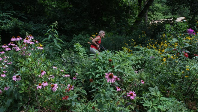 Maya van Rossum, the Delaware River Keeper, goes after a weed in her native plant garden in Bryn Mawr, PA. Her garden helps filter water back into the earth, reducing erosion and pollution in nearby waterways.