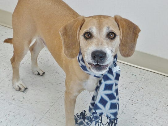 Boomer is a 6-year-old hound mix who is just the sweetest