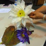 Cox talks Waterlilies to Calusa Garden Club