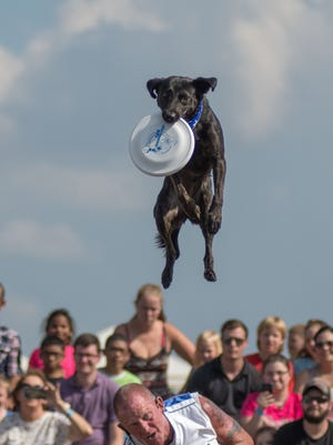 Clarksville Regional Airport and the Humane Society of Clarksville-Montgomery County partnered with Fortera Credit Union to present Wags & Wings Family Fun Fest Oct. 14 at Clarksville Regional Airport.