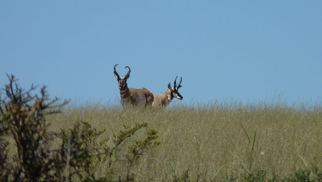 Healthy rangelands are critical to wildlife throughout the BLM Las Cruces District.