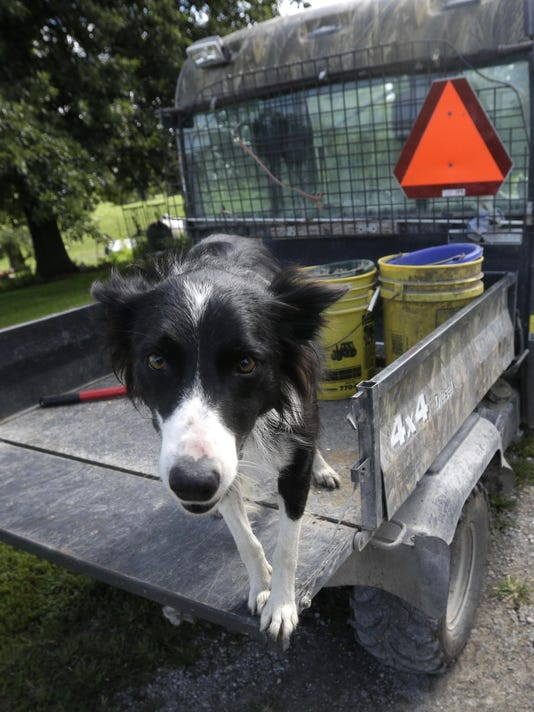 Disabled Farmers-Dogs (3)