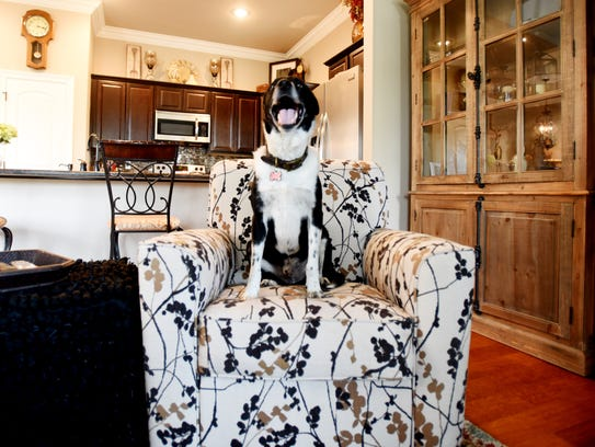 Shep the Clyde Fant dog loves to sit on furniture.