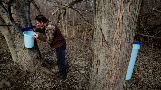 Don McChristian checks the sap levels in a bucket on a maple tree Saturday at his home in Columbus Township. McChristian collects sap from 26 buckets throughout his property about every other day, depending on weather conditions.