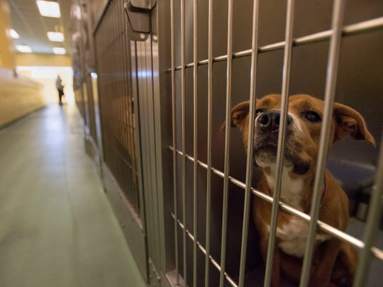 A dog looks through the bars of its cage Friday while potential new pet owners look at animals during an adoption drive at Memphis Animal Services.