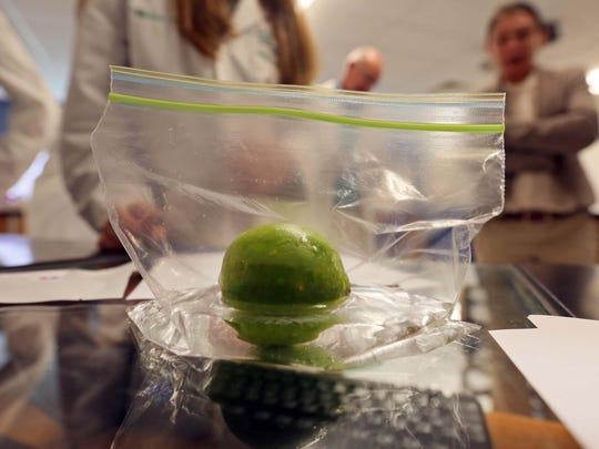 A lime sits in test solution made by ANP Technologies, a Newark based biotech company that creates test for pesticides and toxic metal. The company has partnered with St. Georges High School's Biotechnology classes to teach students how to test for the poisons in fruits in vegetables.