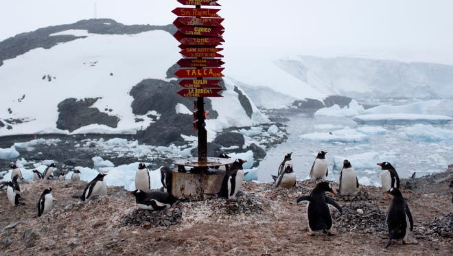 Gentoo penguins gather near a post of wooden arrows with names of cities and their respective distances, at the Bernardo O'Higgins scientific station, Antarctica.