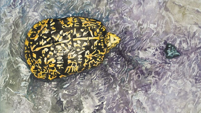 """This painting by Brian Gordy, titled """"In the Cool Creek,"""" and others by Gordy will be on display at Kennedy Library in September. Gordy will talk about turtles 2-3 p.m. Sept. 22 at the library."""