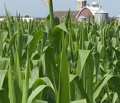 WI farmers facing more pests, highers costs due to late planting