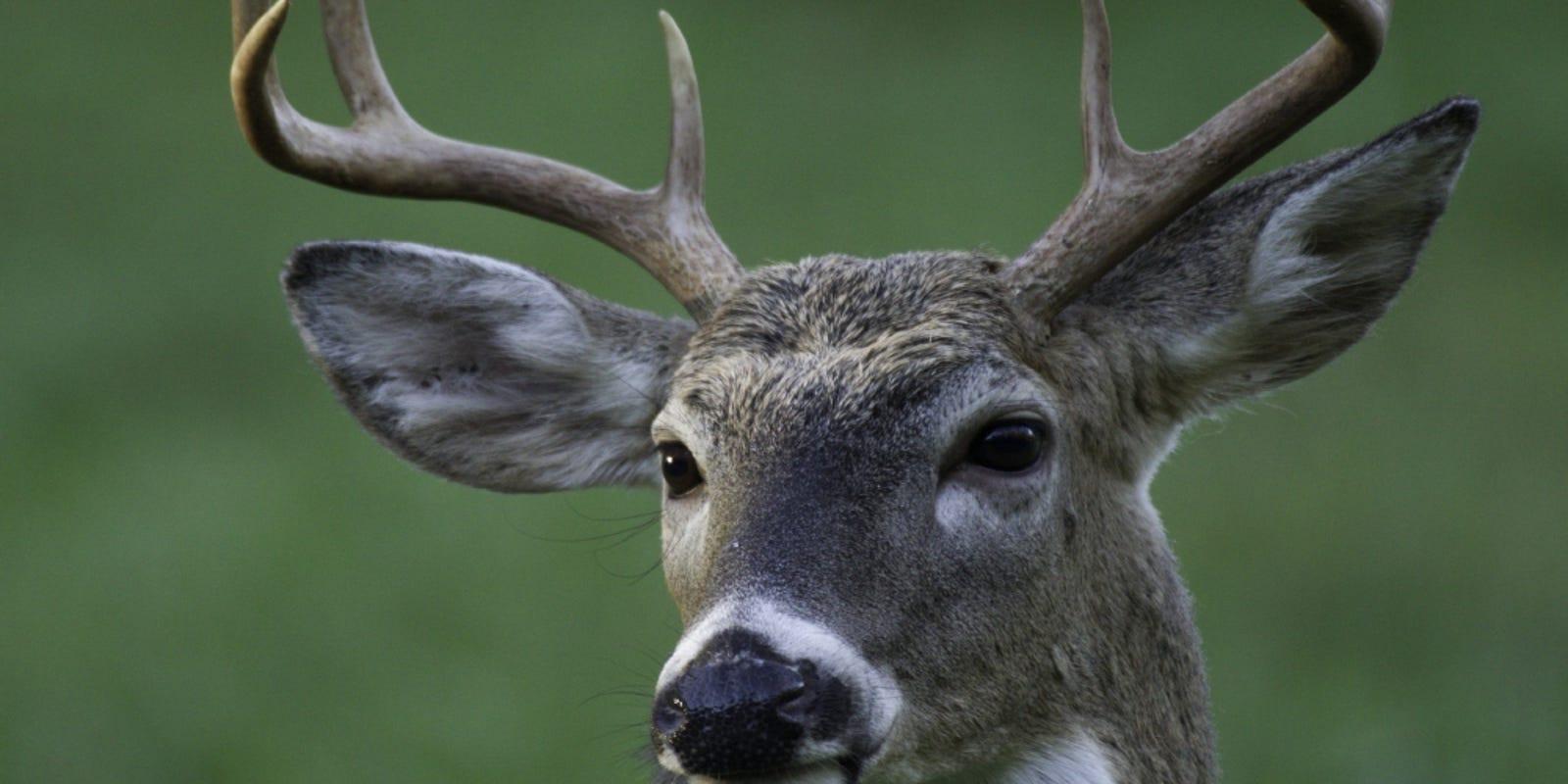 Hunter killed by deer in Arkansas