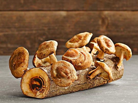 Shitake Mushroom Log Kit.