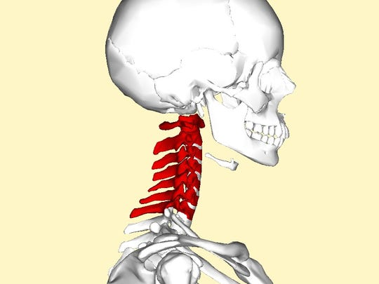 There are seven vertebrae in the cervical spine area.