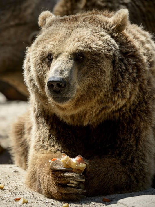 How to spot and prepare for a bear market