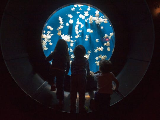 Adventure Aquarium lets families slumber with the mesmerizing backdrop of sea creatures.