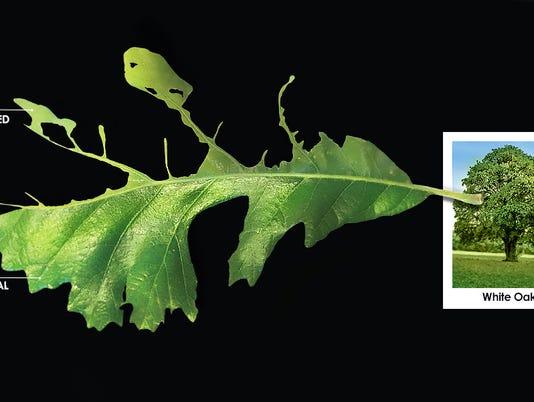 636324414850765315-web.tree.tatters.jpg