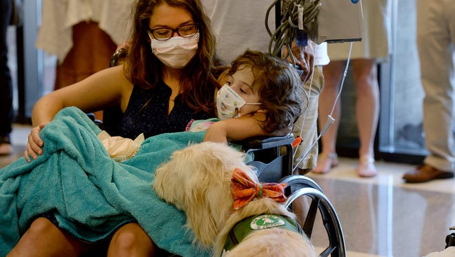 Vivi, a GHS Children's Hospital therapy dog, comforts patients