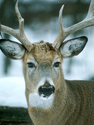 Chronic wasting disease is an epidemic plaguing Wisconsin.