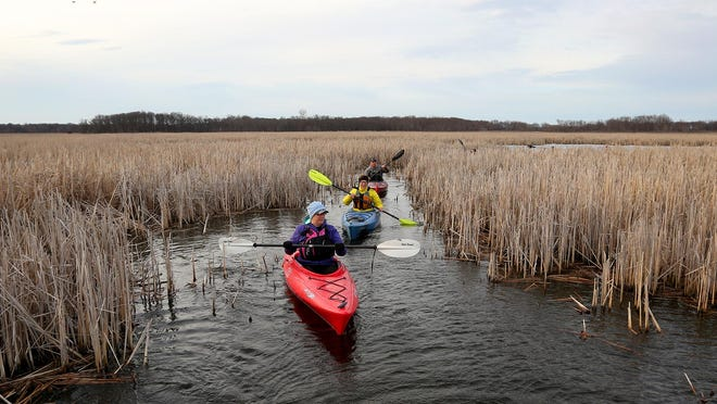Kathleen Hummel and Dianna Geiger thread through the cattails at Sweet Marsh near Tripoli during a tour with Crawdaddy Outdoors.
