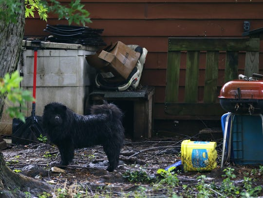 A black chow in the backyard of 2302 W. Bodeb St. Neighbors