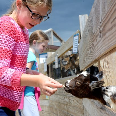 Katherine Kraal, 10, feeds a pygmy goat Thursday, August