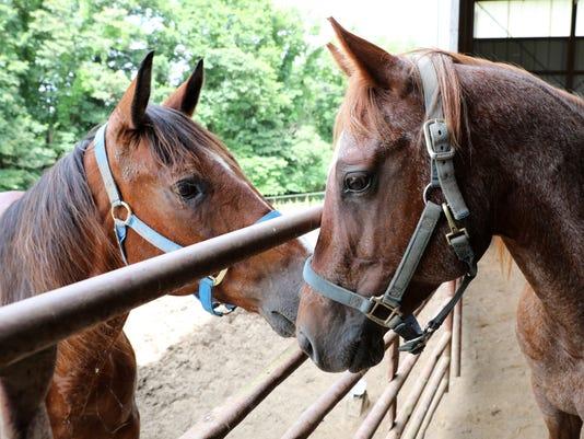 636651090563857242-003-zan-copper-horse.JPG