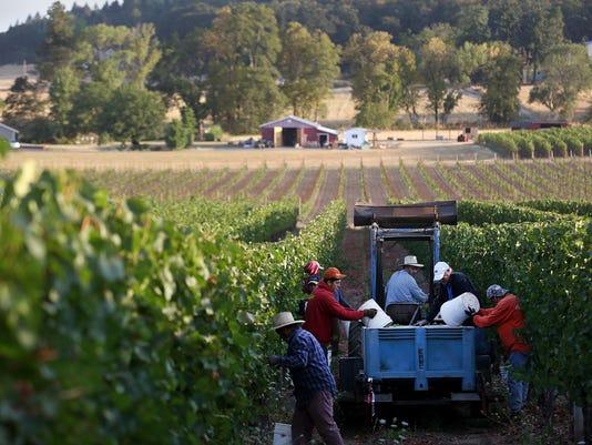 -SAL Huge Grape Harvest THIRD.jpg_20150826.jpg