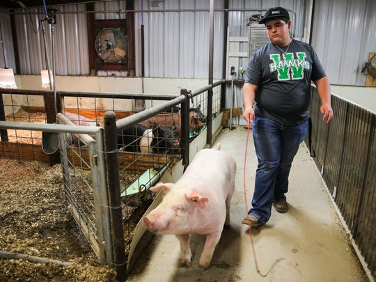 Coltyn Friend walks one of his hogs for training for stock shows Jan. 5, 2017, at his home in Wall.