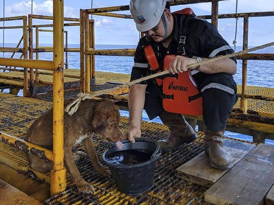 A dog is taken care by an oil rig crew after being